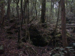 https://lucuaja.files.wordpress.com/2010/03/aokigahara-jukai.jpg?w=300