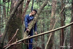 https://lucuaja.files.wordpress.com/2010/03/aokigahara.jpg?w=300